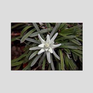 White Alpine Edelweiss Flower Magnets