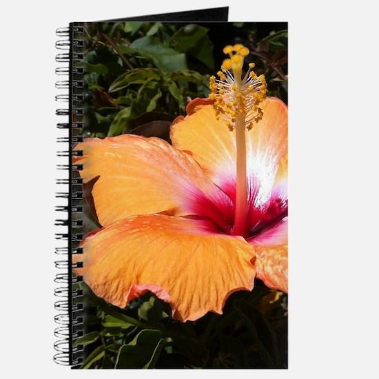 Orange Hibiscus Journal