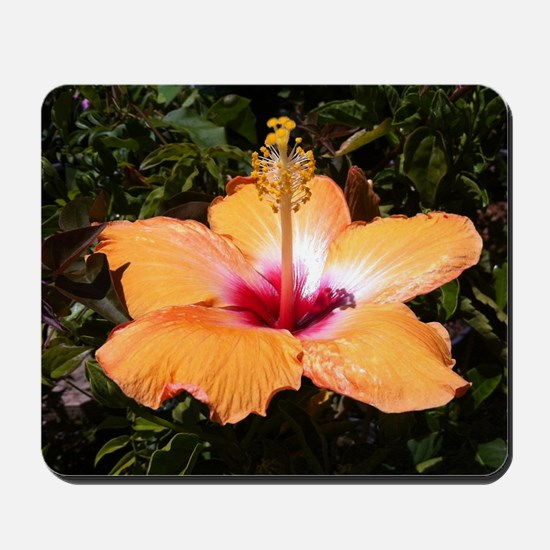 Orange Hibiscus Mousepad