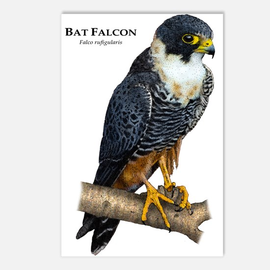 Bat Falcon Postcards (Package of 8)