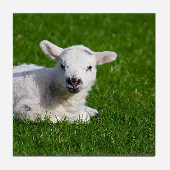 Baby lamb Tile Coaster