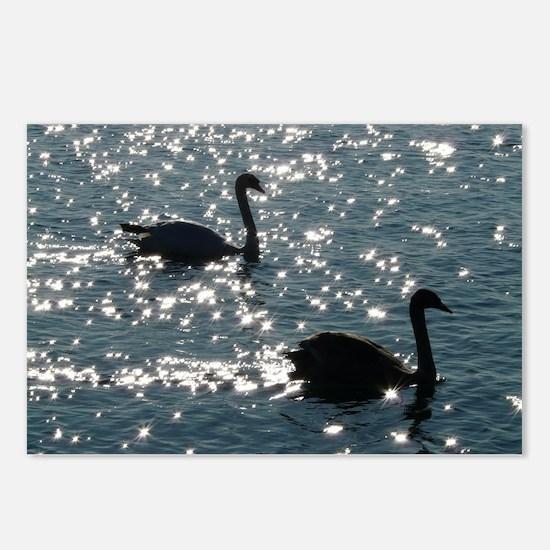 black swan Postcards (Package of 8)