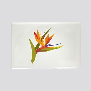 BIRD OF PARADISE Magnets