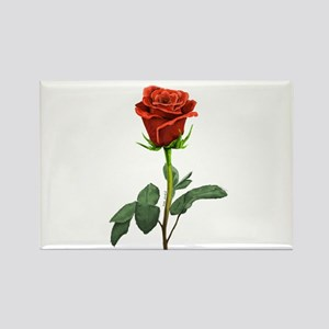 long stem red rose for valentines day Magnets