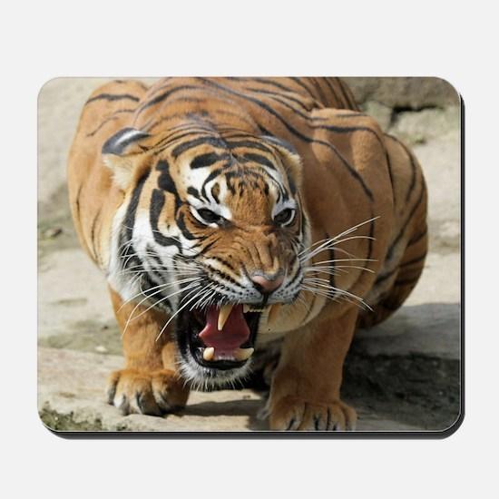 Tiger_2015_0156 Mousepad