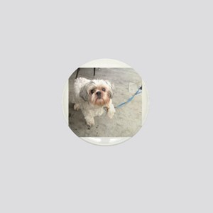 small dog at cafe mostly white Lhasa t Mini Button