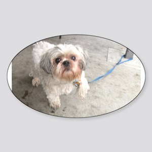 small dog at cafe mostly white Lhasa type Sticker