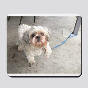 small dog at cafe mostly white Lhasa typ Mousepad