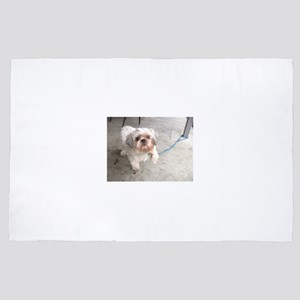 small dog at cafe mostly white Lhasa t 4' x 6' Rug