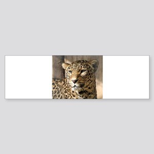 Leopard001 Bumper Sticker