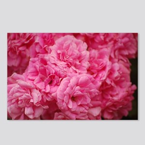 Pale pink roses Postcards (Package of 8)