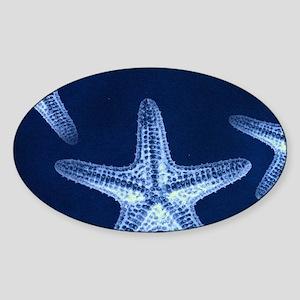 beach blue starfish Sticker