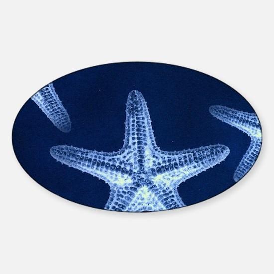 beach blue starfish Decal