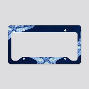 beach blue starfish License Plate Holder