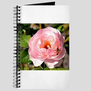 Pale Pink Rose with honey bee Journal