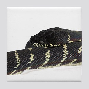 Draven, the Boelen's Python. Tile Coaster