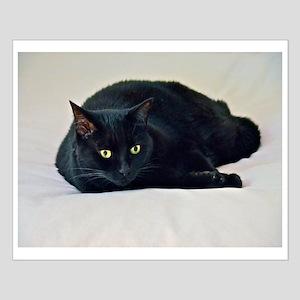 Black Cat! Posters