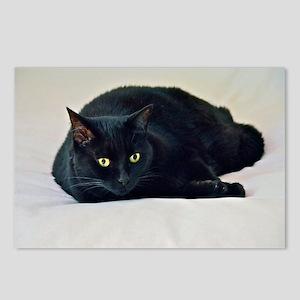 Black Cat! Postcards (Package of 8)