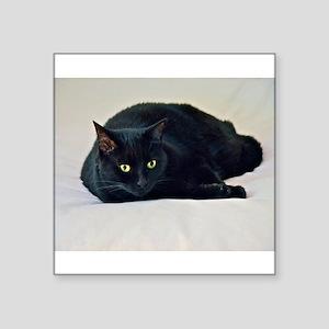 Black Cat! Sticker