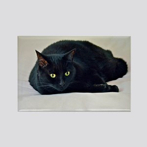 Black Cat! Magnets