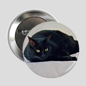 "Black Cat! 2.25"" Button (10 pack)"