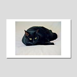 Black Cat! Car Magnet 20 x 12