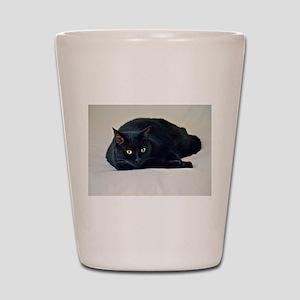 Black Cat! Shot Glass