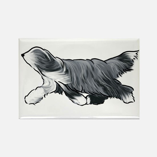 bearded collie Magnets