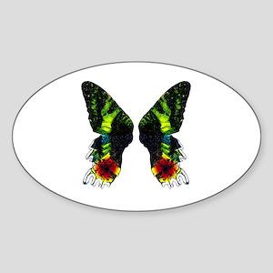 Madagascan Sunset Moth Sticker
