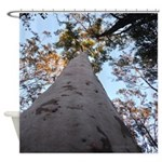 Tree Canopy Sunrise Shower Curtain