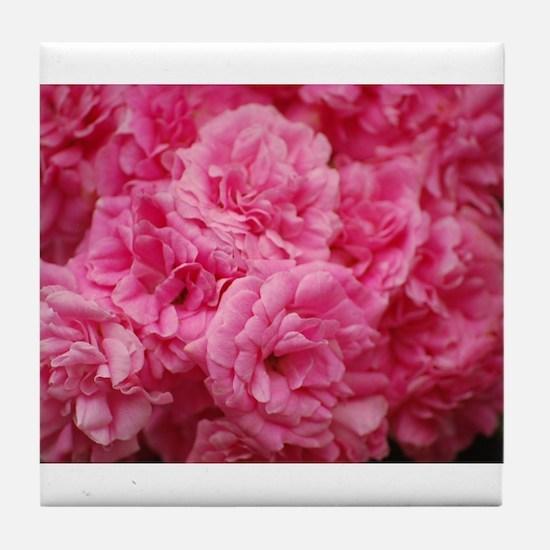 Pale pink roses Tile Coaster