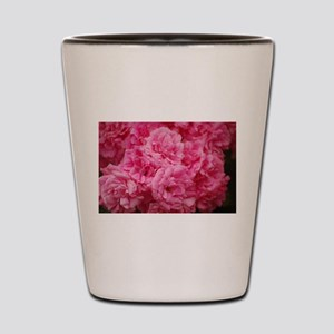 Pale pink roses Shot Glass