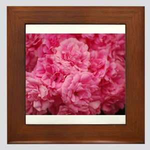 Pale pink roses Framed Tile