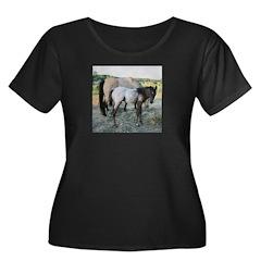 Appy foal T