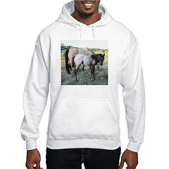 Appy foal Hoodie