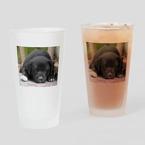 sleeping-puppy Drinking Glass