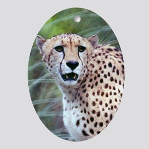 Wildcrds Cheetah Oval Ornament