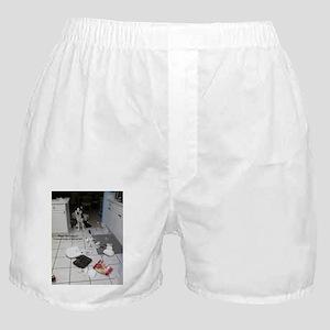 Innocent Siberian Husky Boxer Shorts