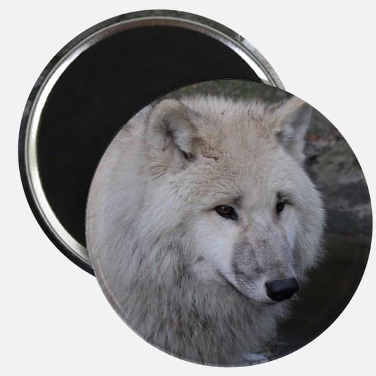 Wolf 0215 Magnet
