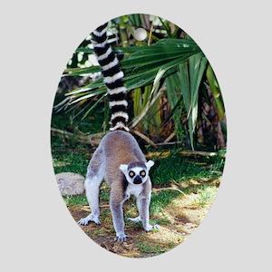 Wildcrds Lemur Oval Ornament