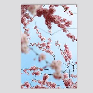 blue cherry blossoms flow Postcards (Package of 8)