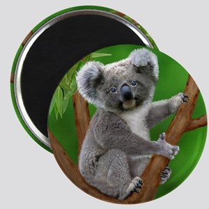 Blue-Eyed Baby Koala Magnets