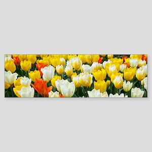 White, Yellow and Orange Tulips Bumper Sticker