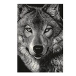 Wolf Sketch Postcards (Package of 8)