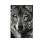Wolf Sketch Rectangle Magnet