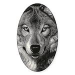 Wolf Sketch Sticker (Oval 50 pk)