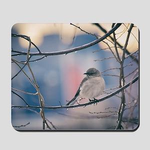 Northern Mockingbird Mousepad