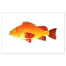 Yelloweye Rockfish Posters