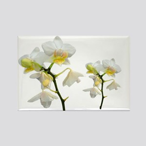 beautiful white orchid flowers. Rectangle Magnet
