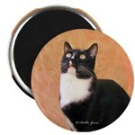 Curious Cat 2.25